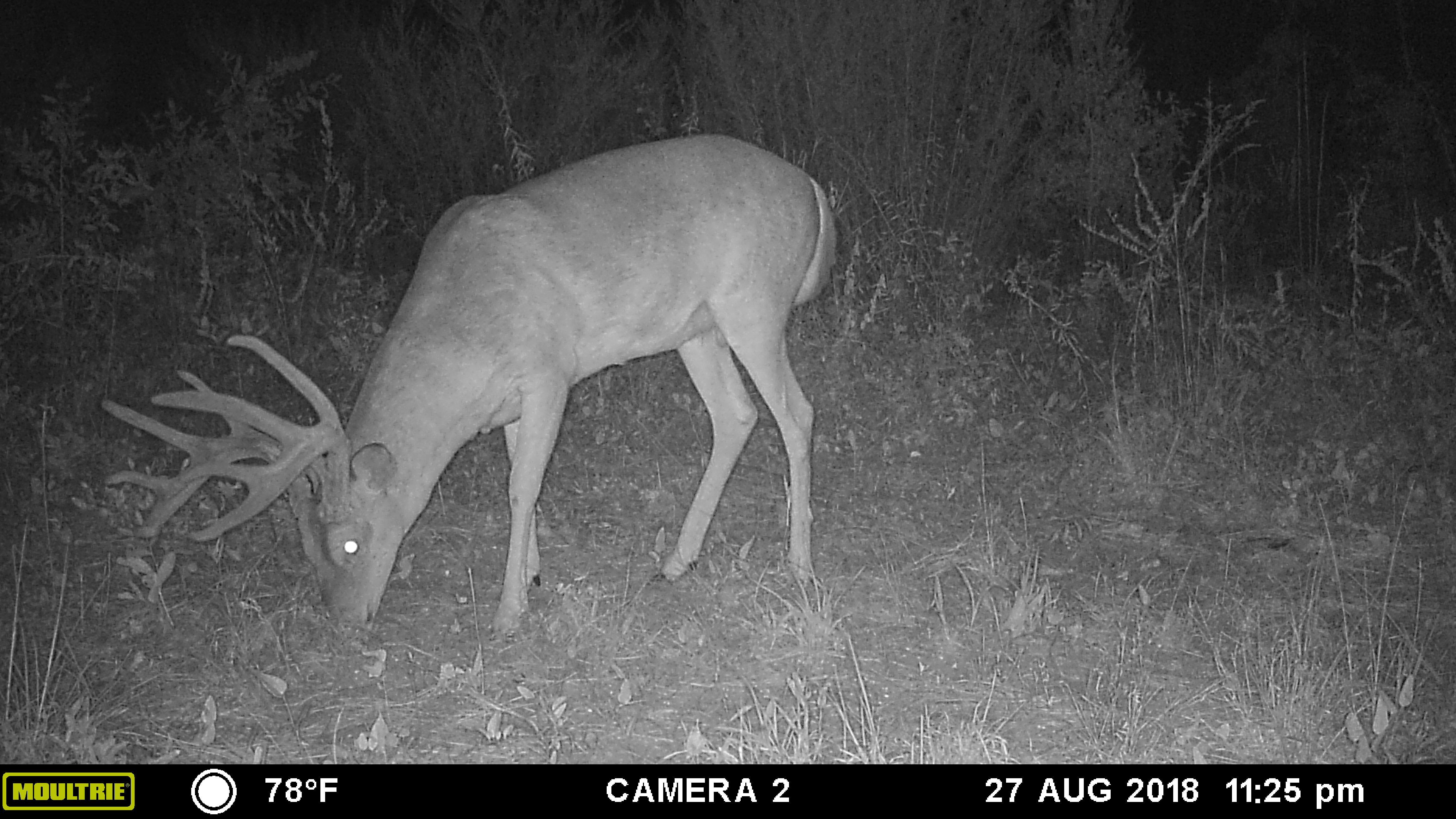 ga deer hunting season 2020
